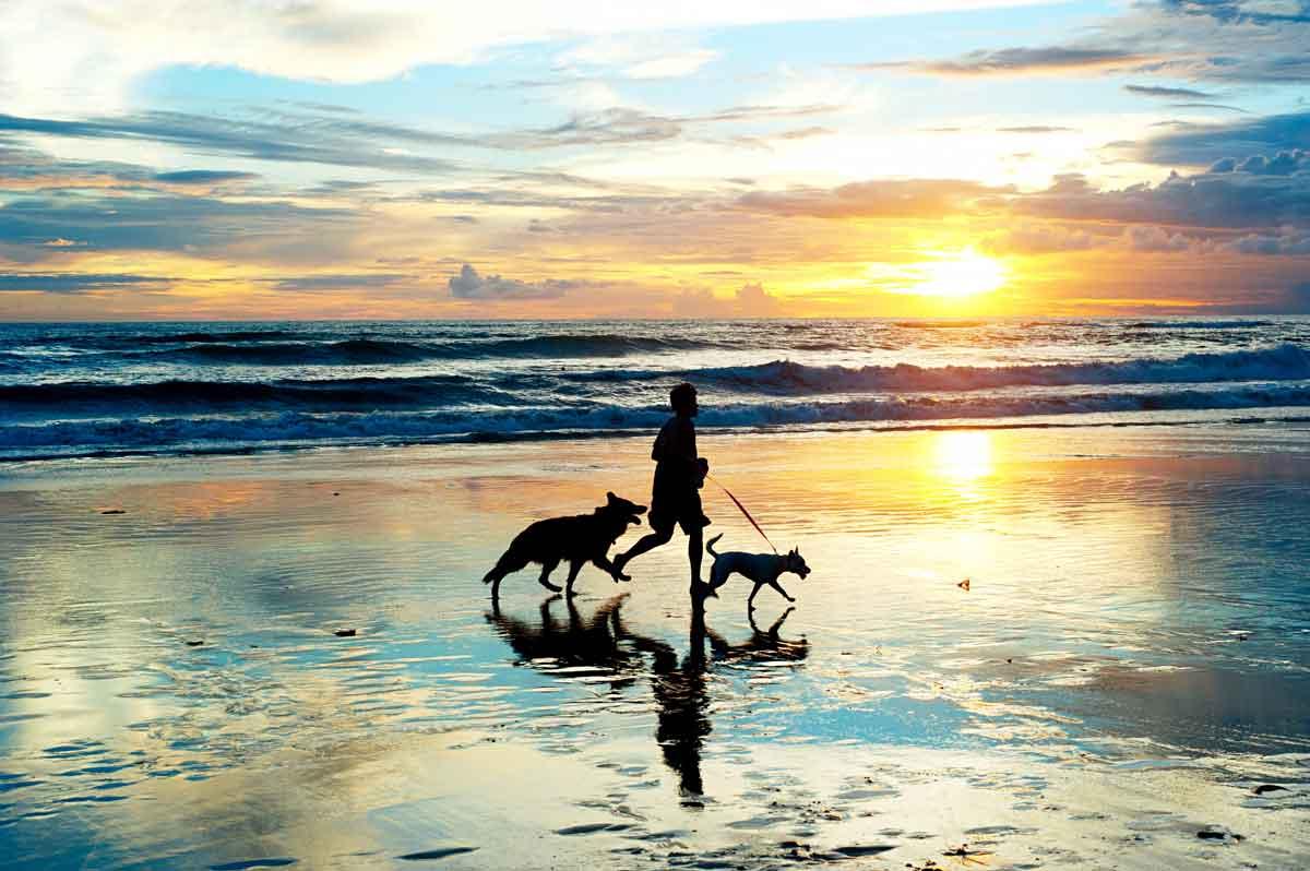 lopen op het stand met de hond